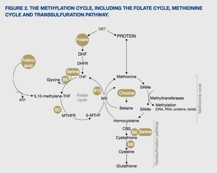 Neurotransmitter Systems, Imbalances, and Treatment Protocols (Genetic Testing, MTHFR,etc)